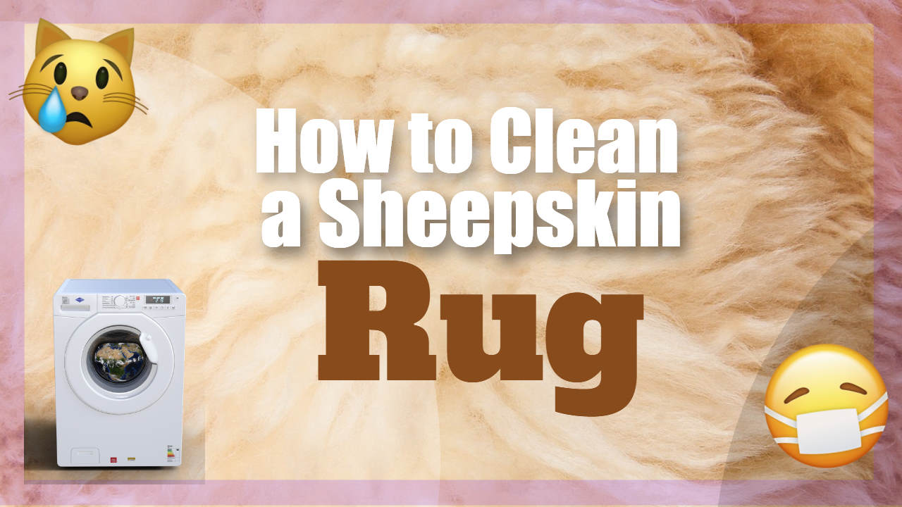 """Image text: """"How to Clean a Sheepskin Rug""""."""