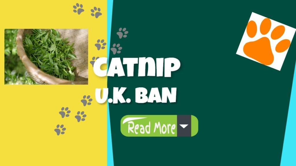catnip uk ban picture